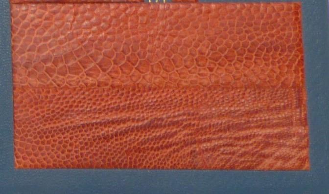 base de patte d'autruche rouge, détail de la patte