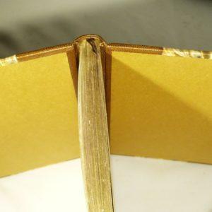 Tête or et tranchefille unie en cuir.