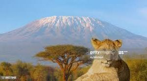 Biennale 2021 épisode 10, Photo du Kilimandjaro.